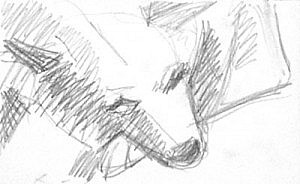 Head of Blaze | Pencil on Paper | approx 4 x 6 inches | undated